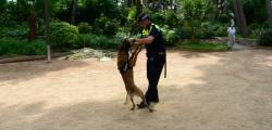 Salou improves safety in summer with the canine unit